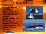 i order cetacea