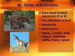 m order artiodactyla