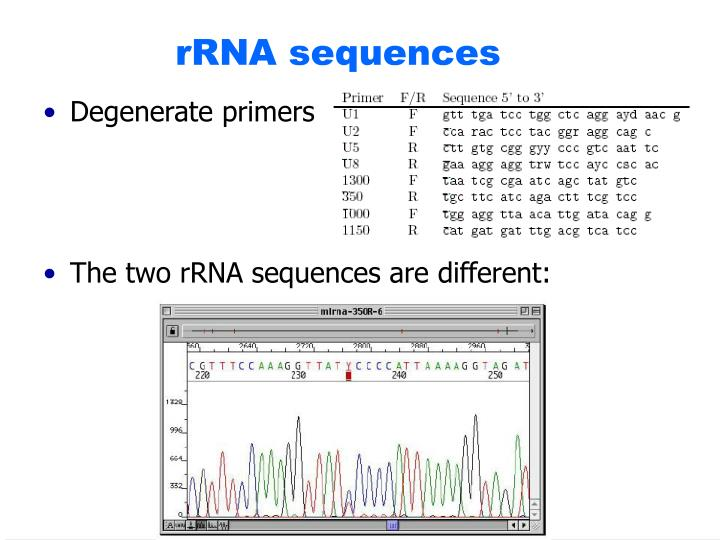 rRNA sequences