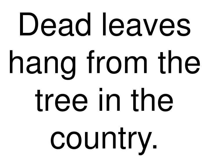 Dead leaves hang from the tree in the country.