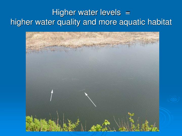 Higher water levels  =