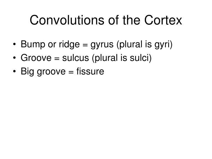 Convolutions of the Cortex