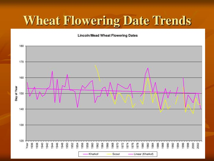 Wheat Flowering Date Trends