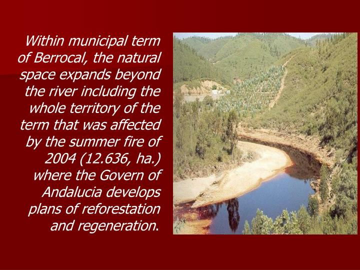 Within municipal term of Berrocal, the natural space expands beyond the river including the whole territory of the term that was affected by the summer fire of 2004 (12.636, ha.) where the Govern of Andalucia develops plans of reforestation and regeneration