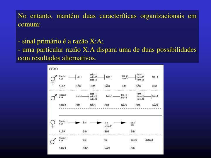 No entanto, mantém duas caracteríticas organizacionais em comum: