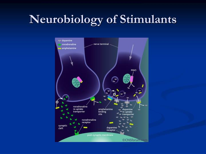 Neurobiology of Stimulants