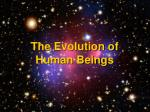 the evolution of human beings