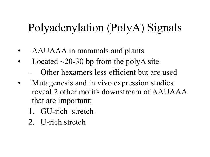 Polyadenylation (PolyA) Signals