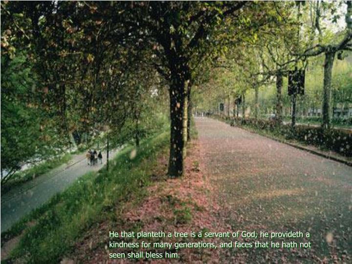 He that planteth a tree is a servant of God, he provideth a