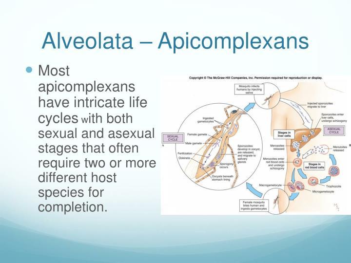 Alveolata – Apicomplexans