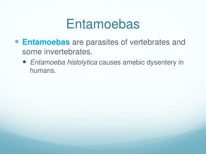 Entamoebas