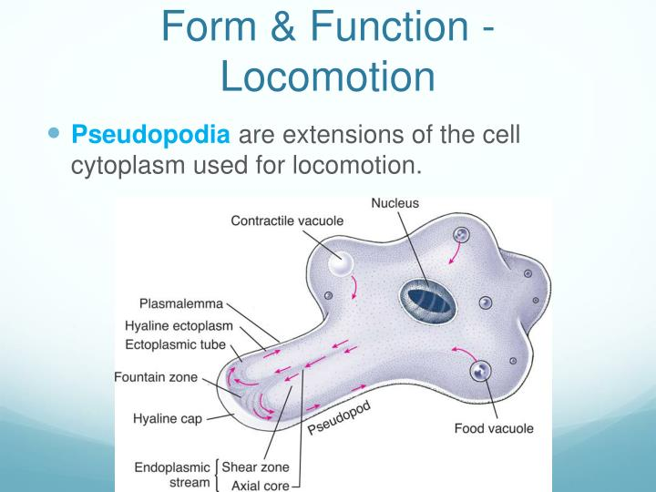 Form & Function - Locomotion