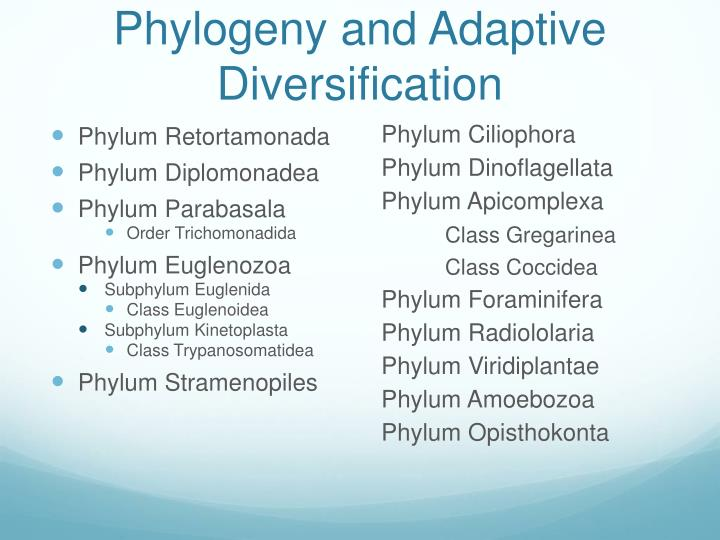 Phylogeny and Adaptive Diversification