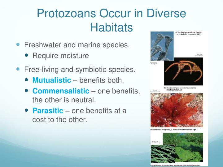 Protozoans Occur in Diverse Habitats