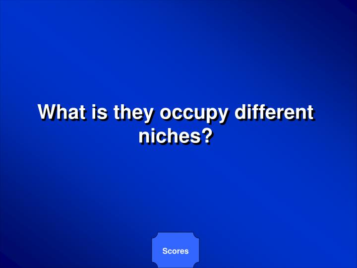 What is they occupy different niches?