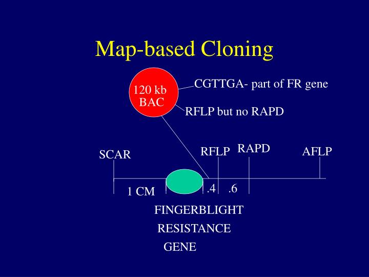 Map-based Cloning