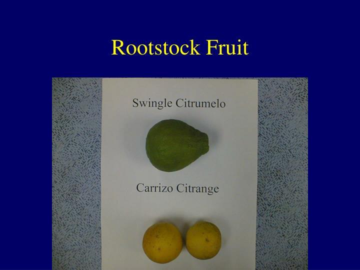 Rootstock Fruit