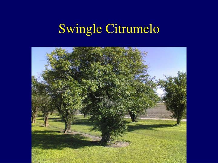Swingle Citrumelo
