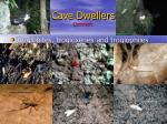 cave dwellers common