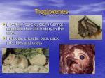 trogloxenes