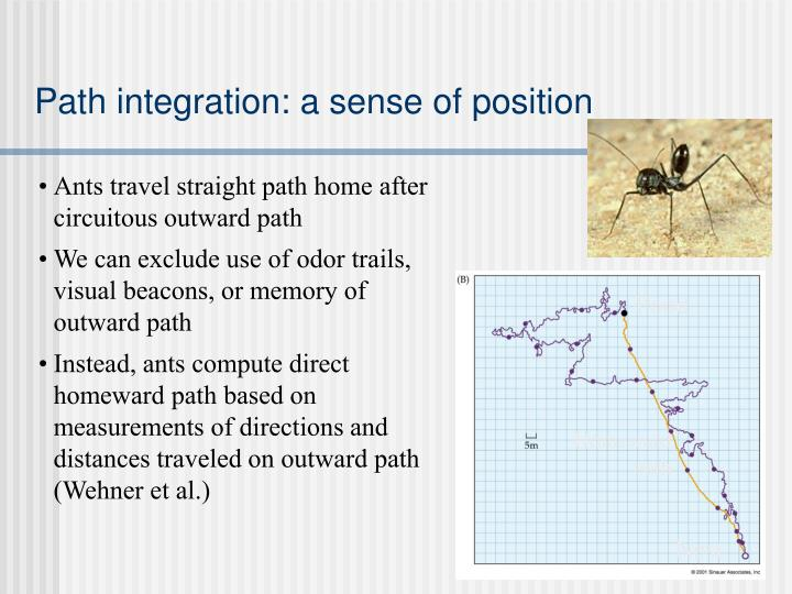 Path integration: a sense of position