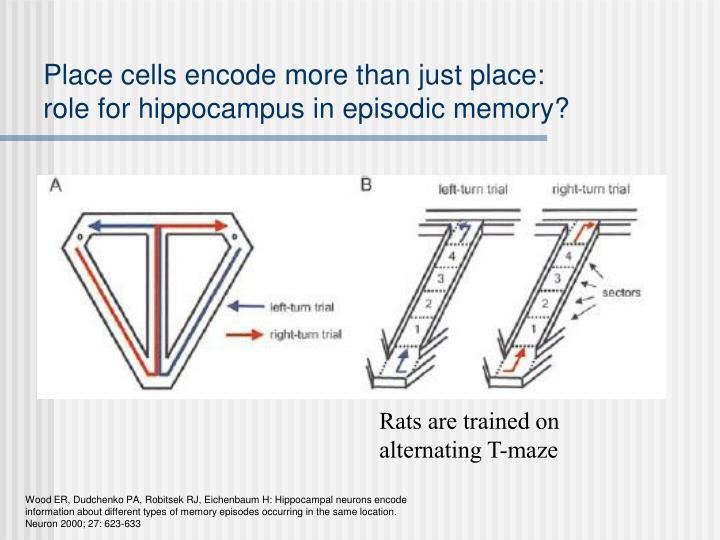 Place cells encode more than just place: