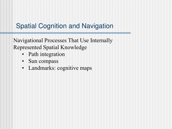 Spatial Cognition and Navigation