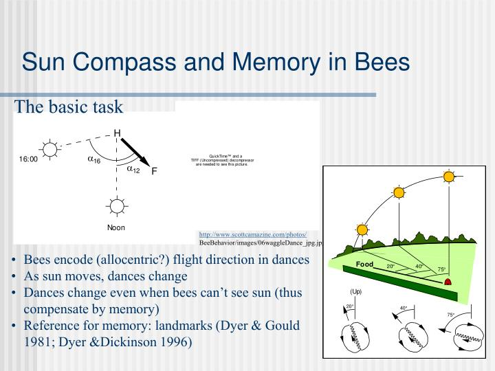 Sun Compass and Memory in Bees