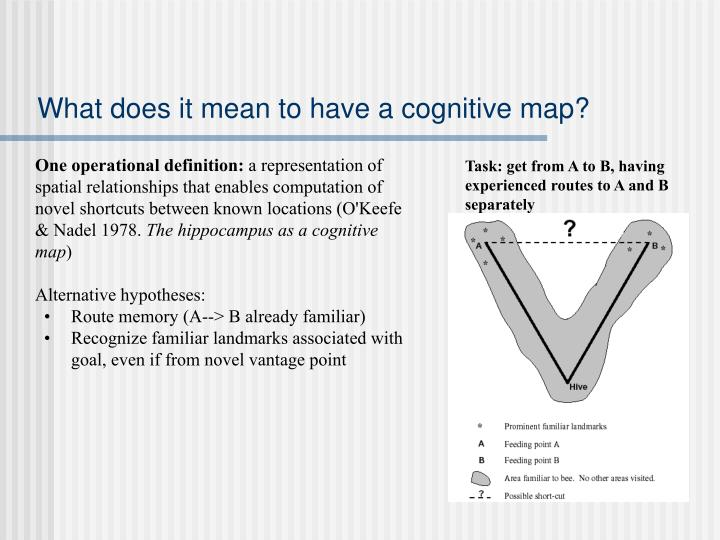 What does it mean to have a cognitive map?