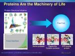 proteins are the machinery of life
