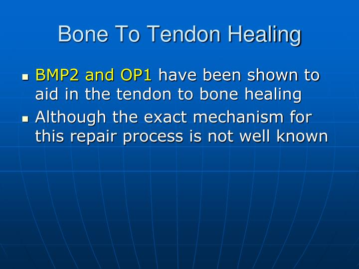 Bone To Tendon Healing