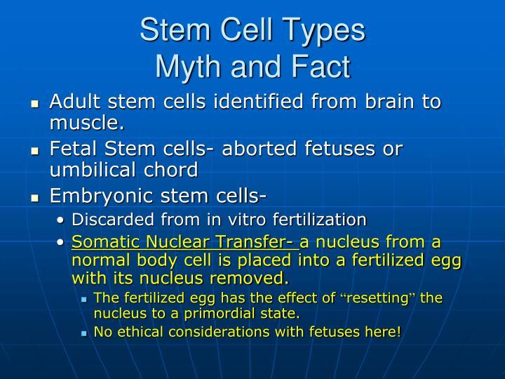 Stem Cell Types