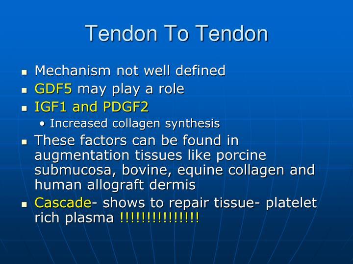 Tendon To Tendon