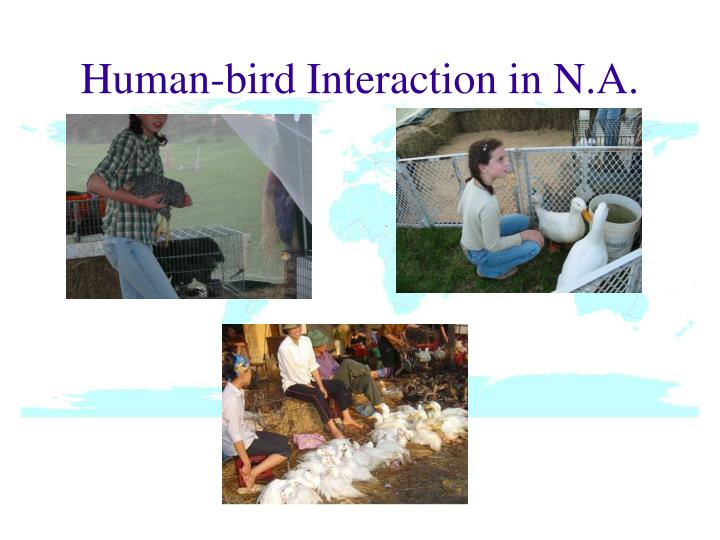 Human-bird Interaction in N.A.