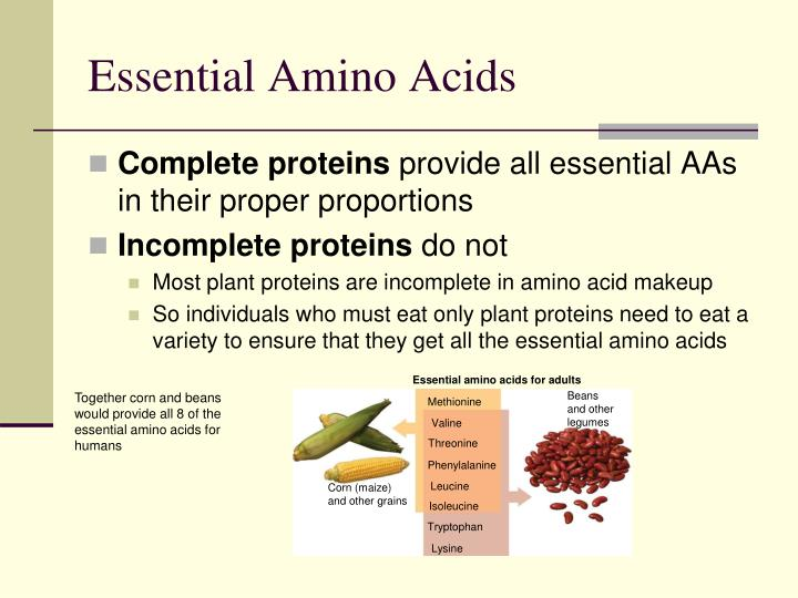 Essential amino acids for adults