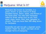marijuana what is it