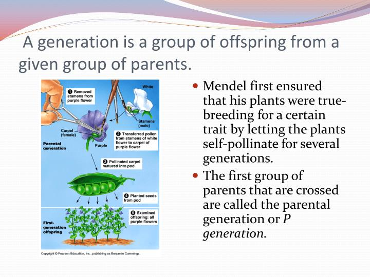 A generation is a group of offspring from a given group of parents.
