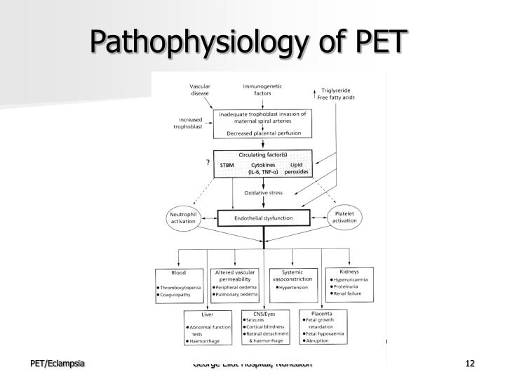 Pathophysiology of PET