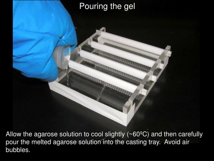 Pouring the gel