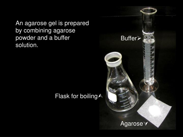 An agarose gel is prepared by combining agarose powder and a buffer solution.