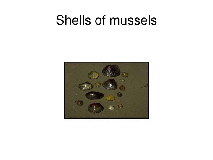 Shells of mussels