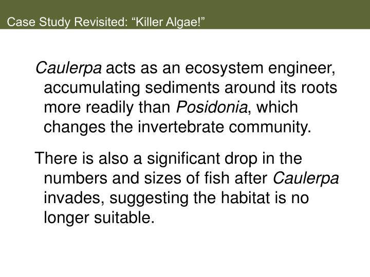 "Case Study Revisited: ""Killer Algae!"""