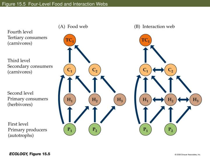 Figure 15.5  Four-Level Food and Interaction Webs