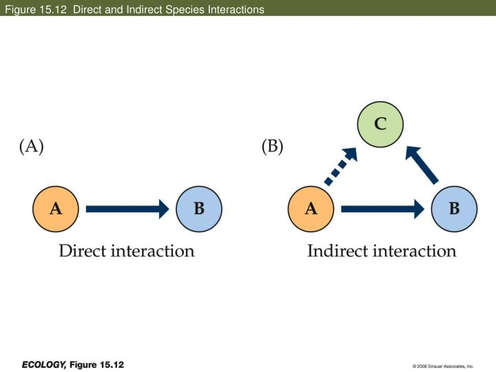 Figure 15.12  Direct and Indirect Species Interactions
