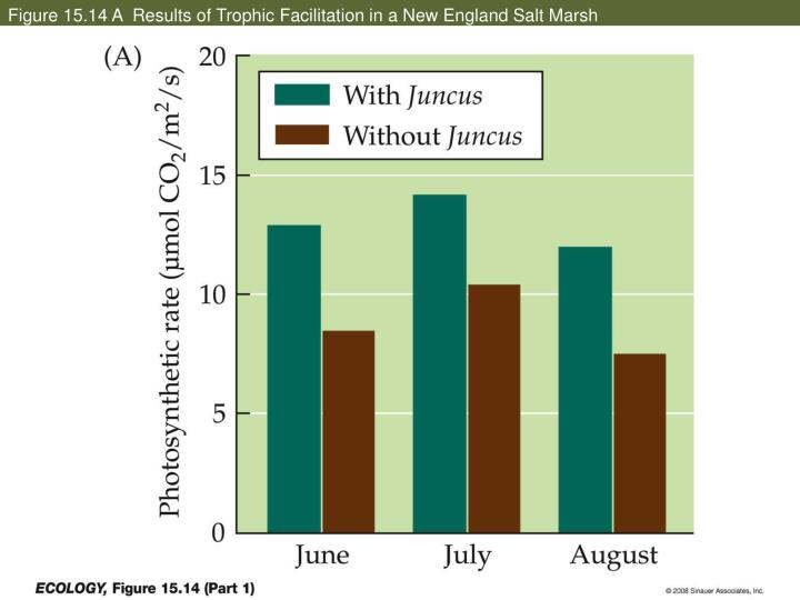 Figure 15.14 A  Results of Trophic Facilitation in a New England Salt Marsh