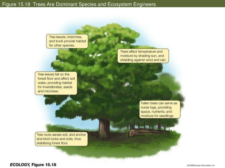 Figure 15.18  Trees Are Dominant Species and Ecosystem Engineers