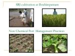 sri cultivation at ibrahimpatnam