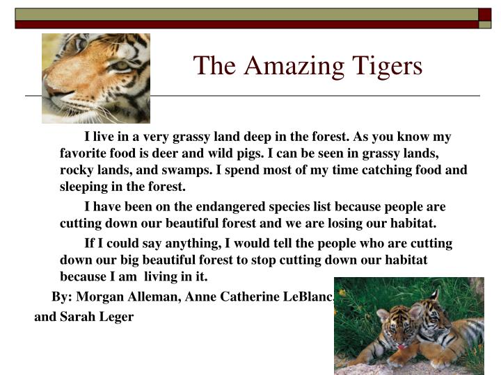 The Amazing Tigers
