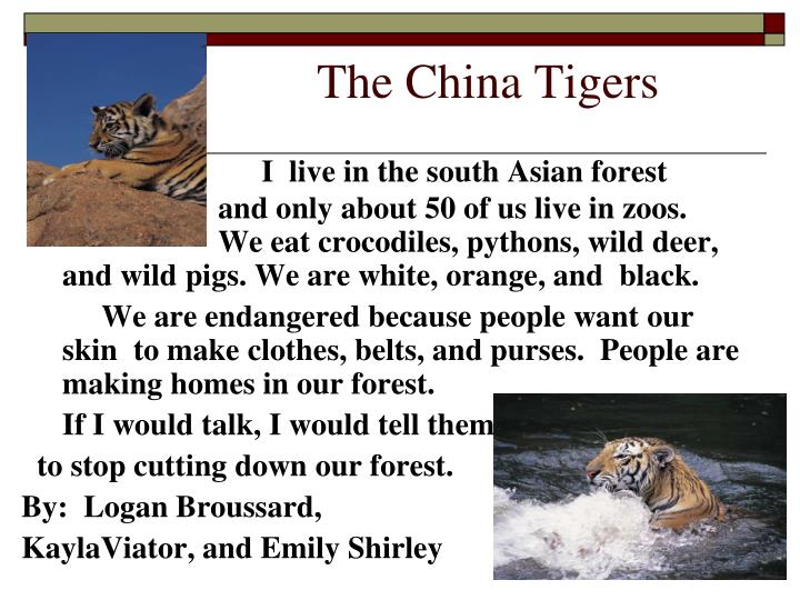 The China Tigers