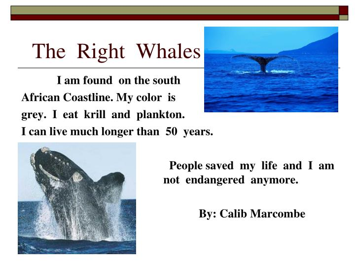 The  Right  Whales